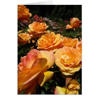 Orange Roses in Spring Greeting Card