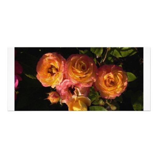 orange roses with dew rack cards