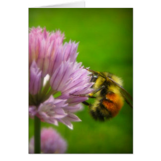 Orange-Rumped Bee on Chive Blosssom Card