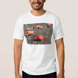 Orange sally lightfoot crabs shirt