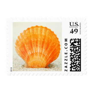 Orange Scallop Shell Standing Upright In Sand Postage Stamp