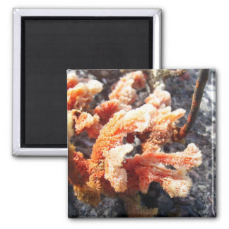 Orange Sea Sponge 2 Inch Square Magnet