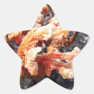 Orange Sea Sponge Star Sticker
