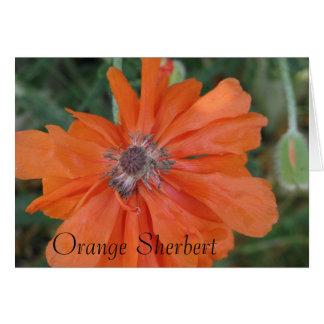Orange Sherbert Flower Card
