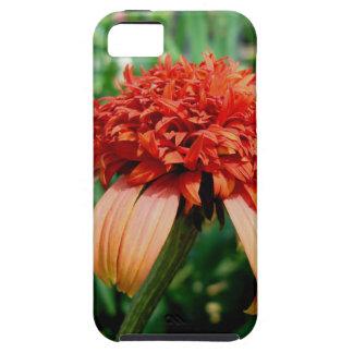 Orange Southern Belle Coneflower iPhone SE/5/5s Case