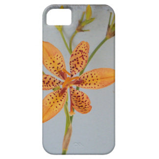 Orange spotted Iris called a  Blackberry lily iPhone SE/5/5s Case
