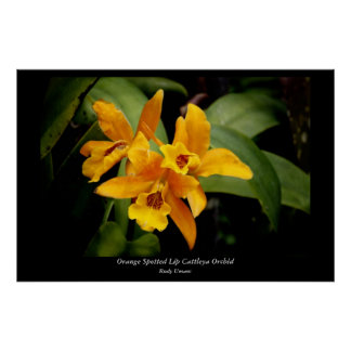Orange Spotted Lip Cattleya Orchid Poster