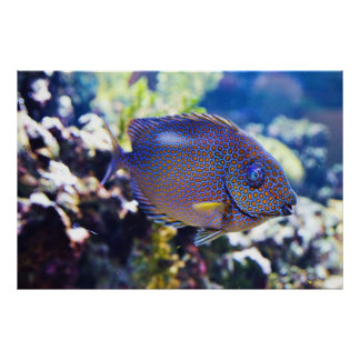 Orange Spotted Rabbit Fish Poster