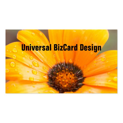 Orange Spring Flash African Daisy Close Up Business Card Template