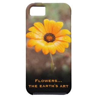 Orange Spring Flash African Daisy Close Up Photo iPhone SE/5/5s Case