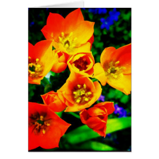 Orange Star of Bethlehem Blank Greeting Card