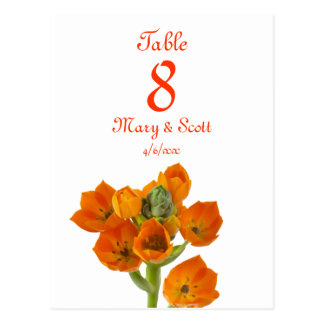Orange Star of Bethlehem Table Number postcard