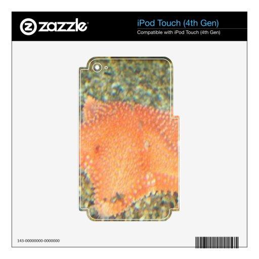 orange starfish iPod touch 4G decal