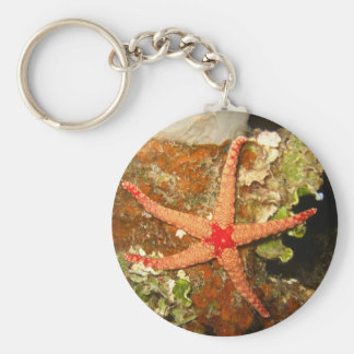 Orange Starfish Keychain
