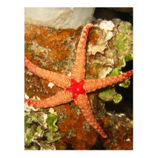 Orange Starfish Postcard