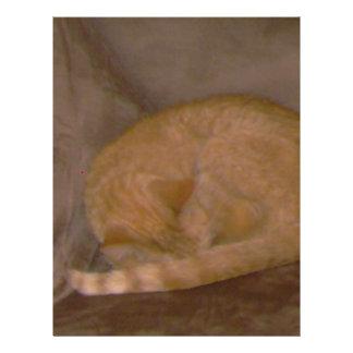 Orange striped  cat cards, tee, clock, ornament letterhead design