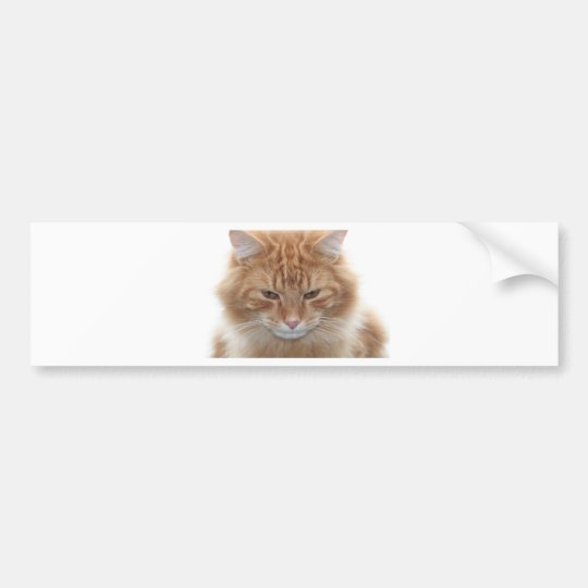 Orange Stripped Tabby Cat Bumper Sticker