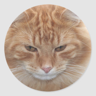 Orange Stripped Tabby Cat Classic Round Sticker