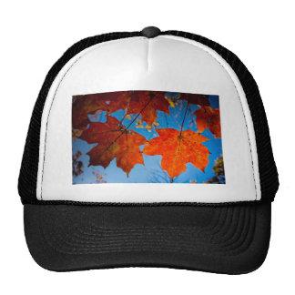 Orange Sugar Maple Leaves Hats