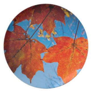 Orange Sugar Maple Leaves Plate