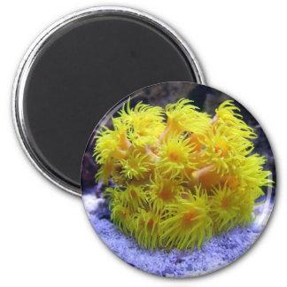 Orange Sun Coral 2 Inch Round Magnet