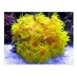 Orange Sun Coral Postcard
