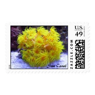 Orange Sun Coral Stamp