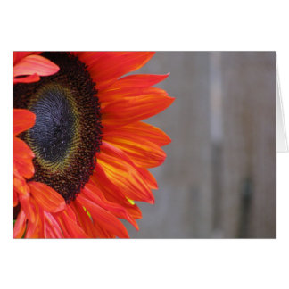 Orange Sunflower Blaze Card