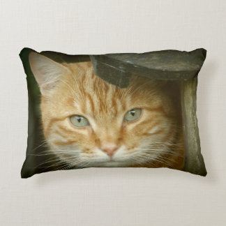 Orange tabby accent pillow