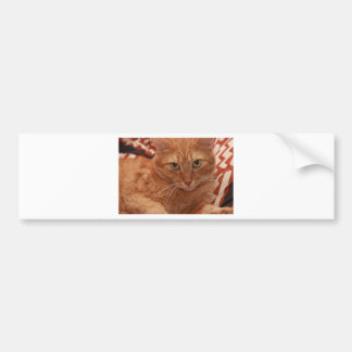 Orange Tabby Bumper Sticker