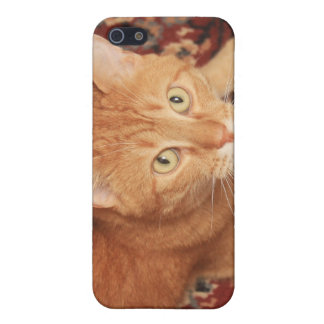 Orange Tabby Case For iPhone SE/5/5s