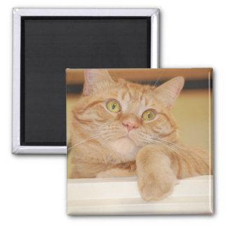 Orange Tabby Cat 2 Inch Square Magnet