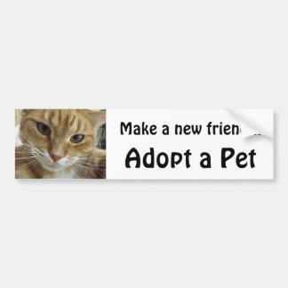 Orange Tabby Cat Adopt a Pet Bumper Stickers