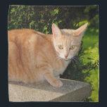 """Orange Tabby Cat Bandana<br><div class=""""desc"""">An orange tabby cat decorates this lovely bandana</div>"""