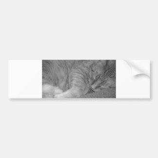 Orange Tabby Cat/Black & White Photo Bumper Sticker