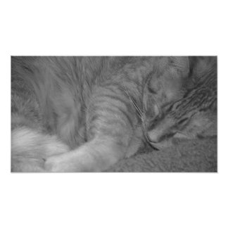 Orange Tabby Cat/Black & White Photo Print