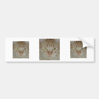 Orange Tabby Cat Bumper Sticker
