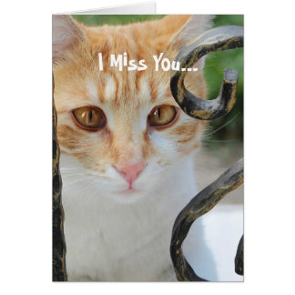 Orange Tabby cat Card