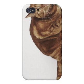 Orange Tabby cat Case For iPhone 4