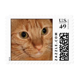 Orange Tabby Cat Close up Postage Stamp