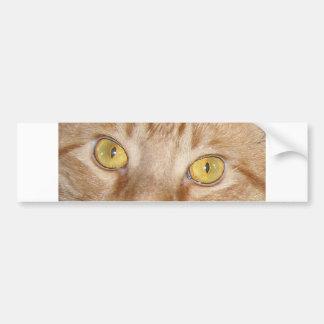 Orange Tabby Cat Eyes Bumper Sticker