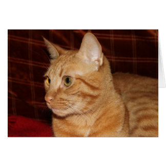 Orange Tabby Cat Face Profile Greeting Cards