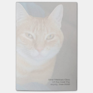 Orange tabby cat fade post-it notes