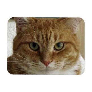 Orange Tabby Cat Flexible Magnet