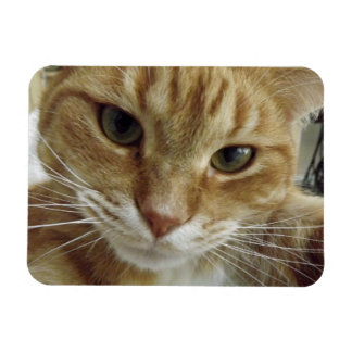 Orange Tabby Cat Flexible Magnet