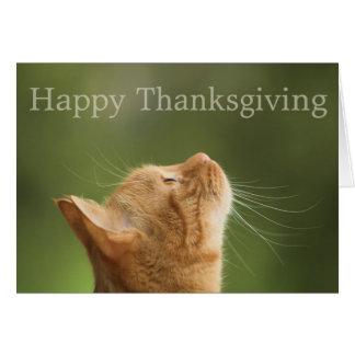 Orange Tabby Cat :: Happy Thanksgiving Card