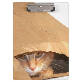 Orange tabby cat in paper bag clipboard