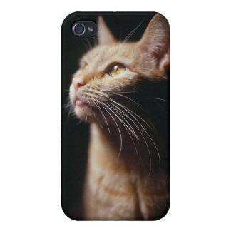 Orange Tabby Cat iPhone 4/4S Case