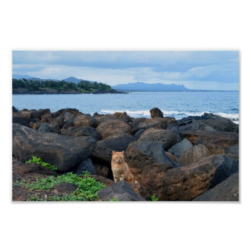 Orange Tabby Cat, Kauai, Hawaii Poster