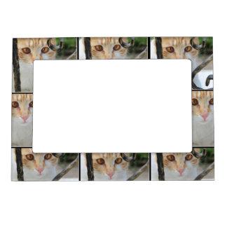 Orange Tabby cat Magnetic Frame